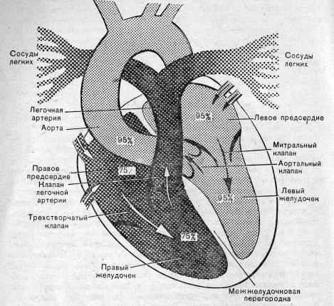 Сердце картинки схема