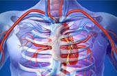 Что представляют собой коронарные артерии?