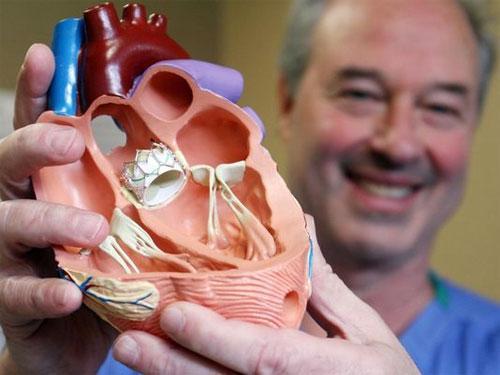 Что представляют собой клапаны сердца?