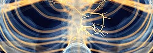 Как атропин воздействует на сердце?