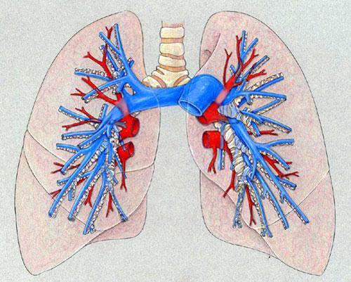 Что такое легочная артерия?