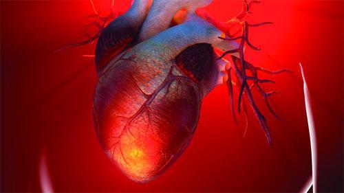 Открытая и замкнутая системы кровообращения