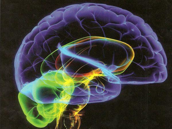 Можно ли восстановить клетки мозга в пожилом возрасте?