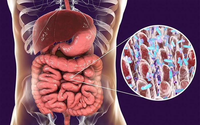 Могут ли кишечные бактерии провоцировать гипертонию?