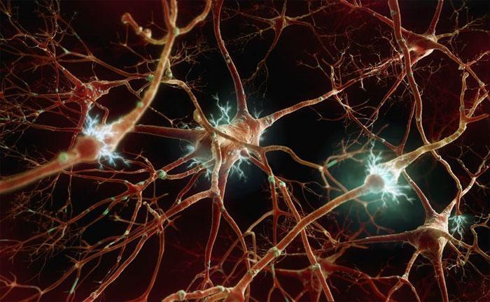 Ветвь вегетативной нервной системы