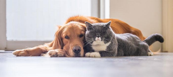 Лечение онкологических заболеваний у животных
