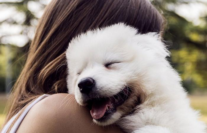 Как собака влияет на здоровье хозяина?